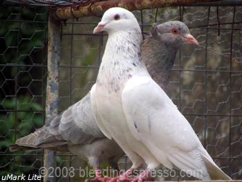 Love birds on Flickr
