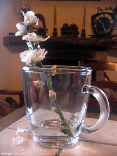 First almond blossoms, 2009 on Flickr