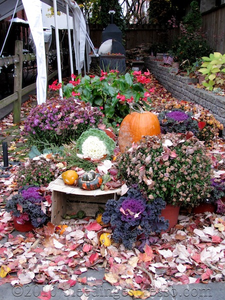 Fall display next to Jack's Firehouse on Fairmount Ave.
