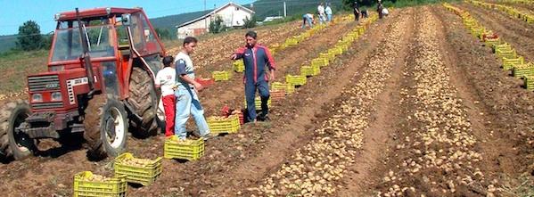 Farm to table Calabria - patata silana